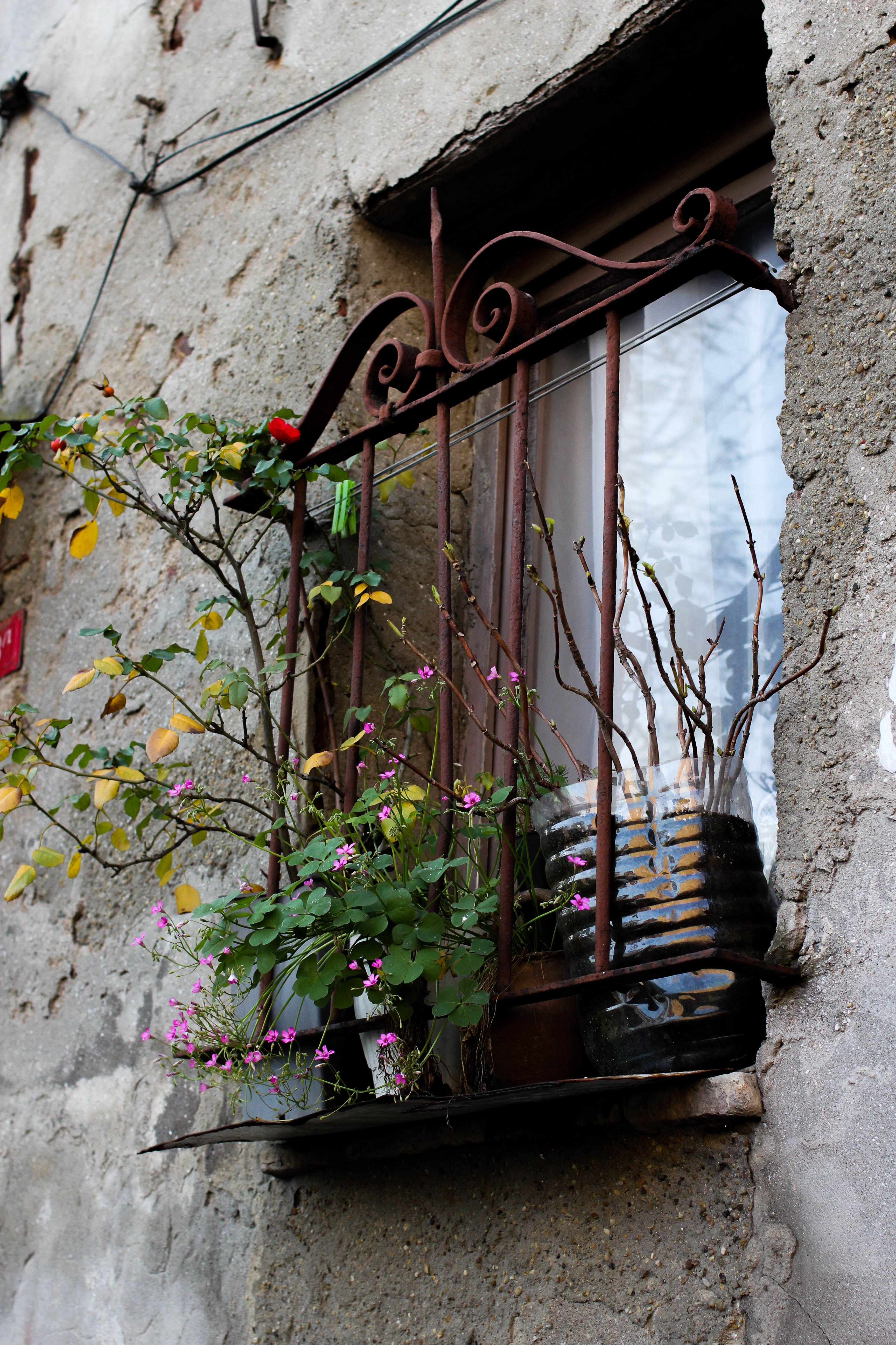 Fener Balat Istanbul Balcones Para Ventanas Puertas Ventanas Flores En Las Ventanas