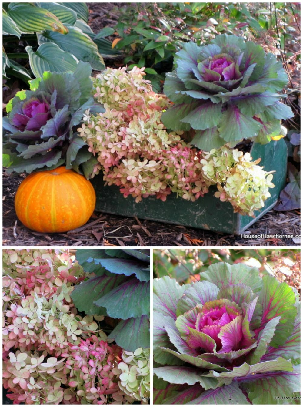 The gorgeous colors of fall. This rustic tool box combination would look great as a centerpiece on your fall table!