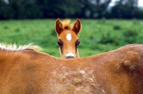 Peek a boo ... i see you ... Equine love