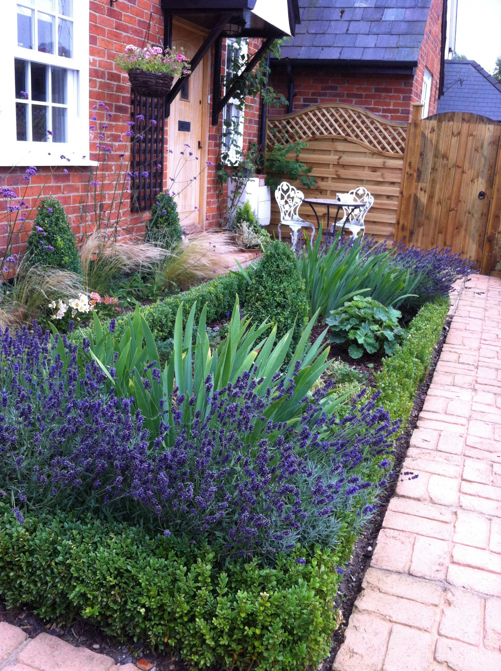 Formal garden in newport essex lavender and box hedging with