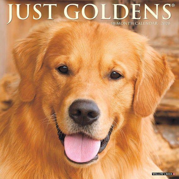 Just Goldens 2020 Wall Calendar Dog Calendar Willow Creek Calendar