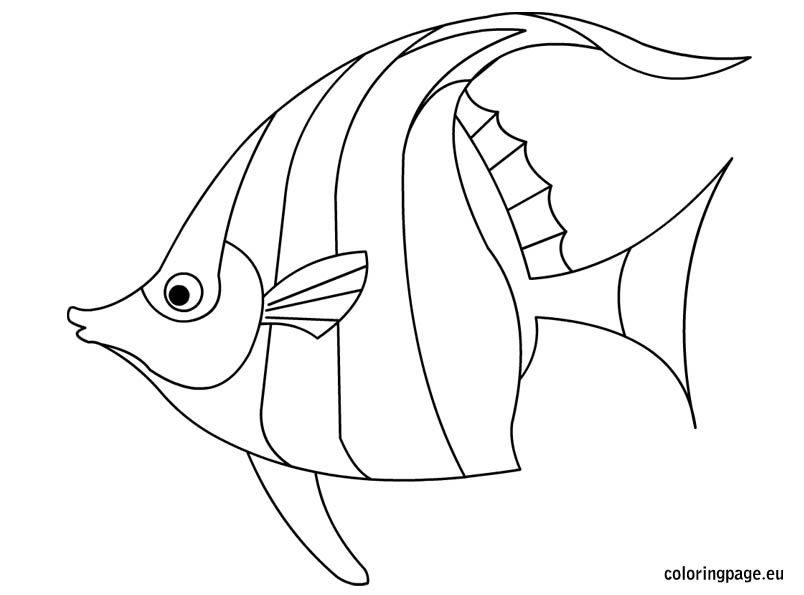 Angelfish Coloring Fish Drawings Fish Coloring Page Fish Outline