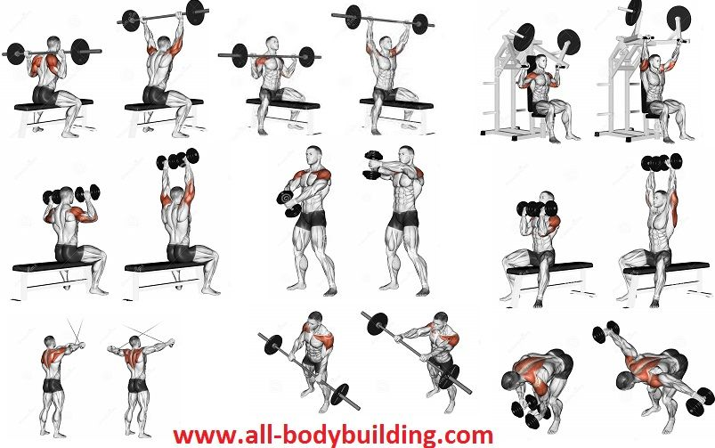 Full Body Muscle Building Workout