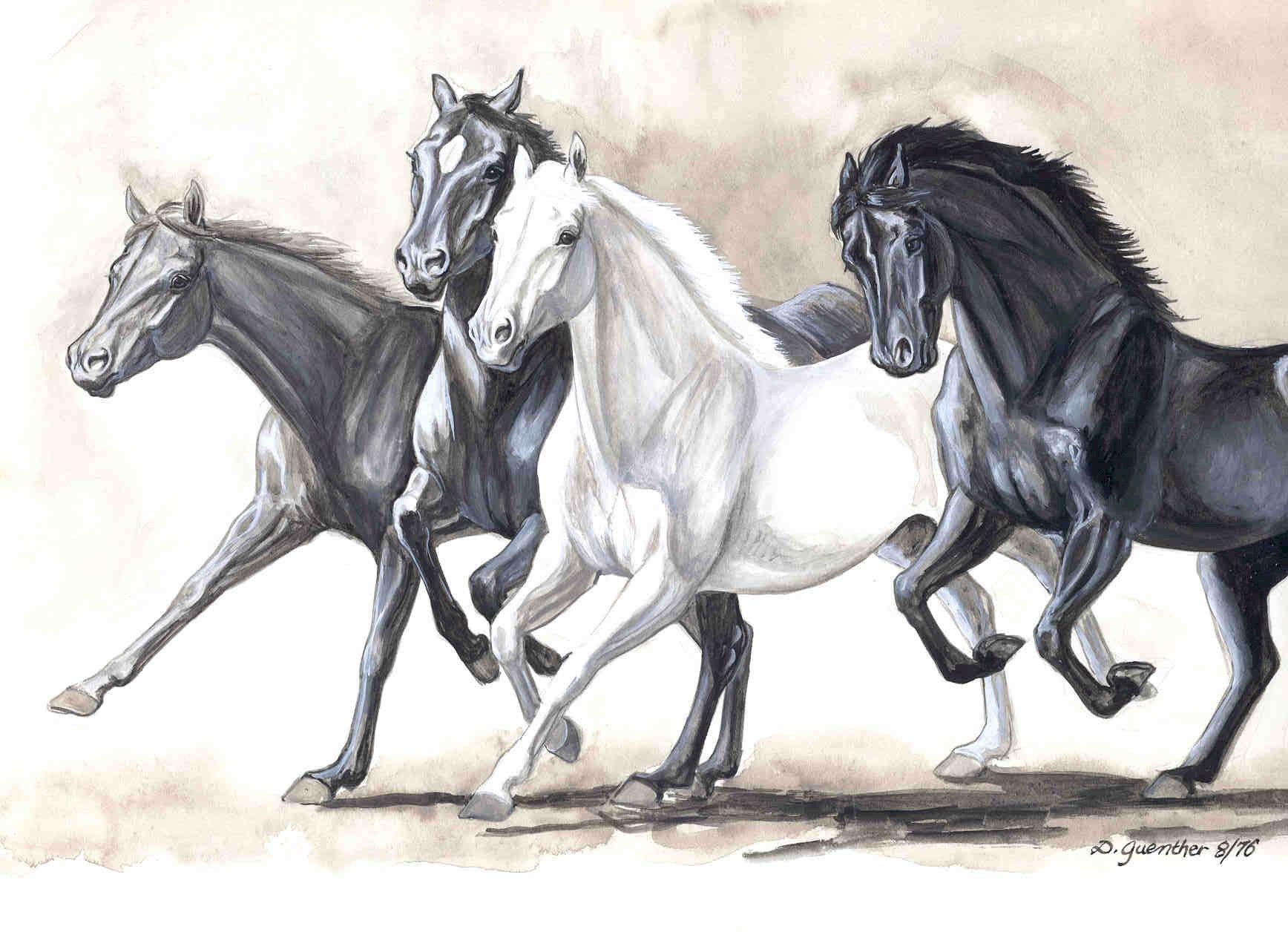 Drawings Of Horses Running Horses Running Gouache Horse
