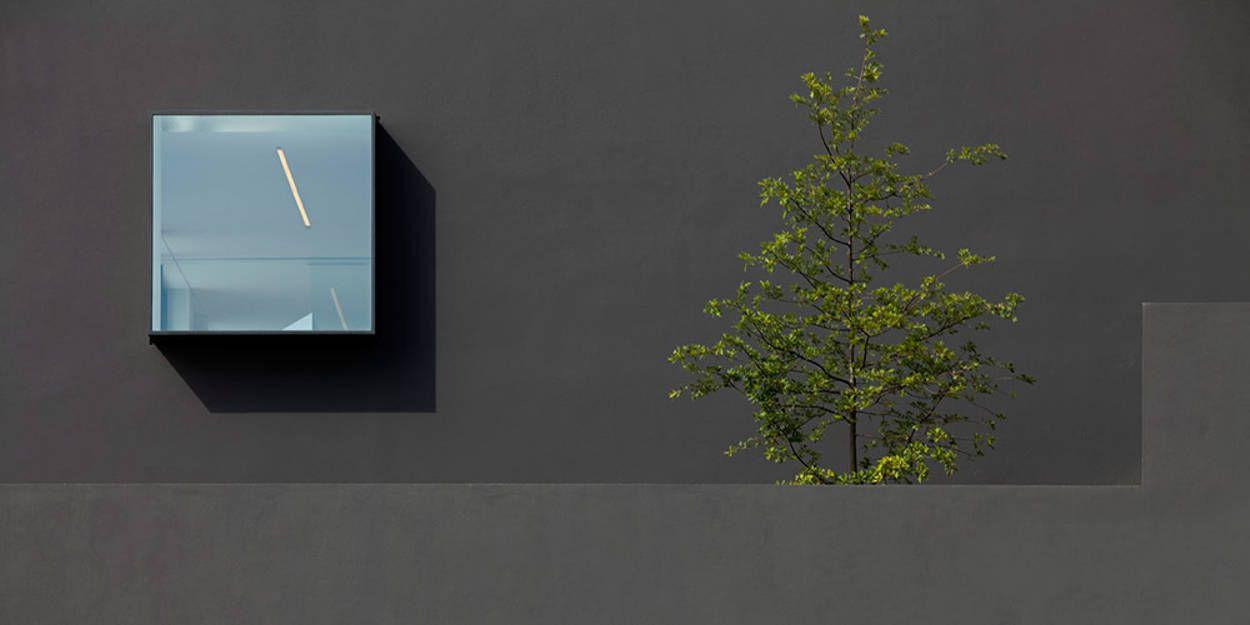 window & tree detail in architectural design