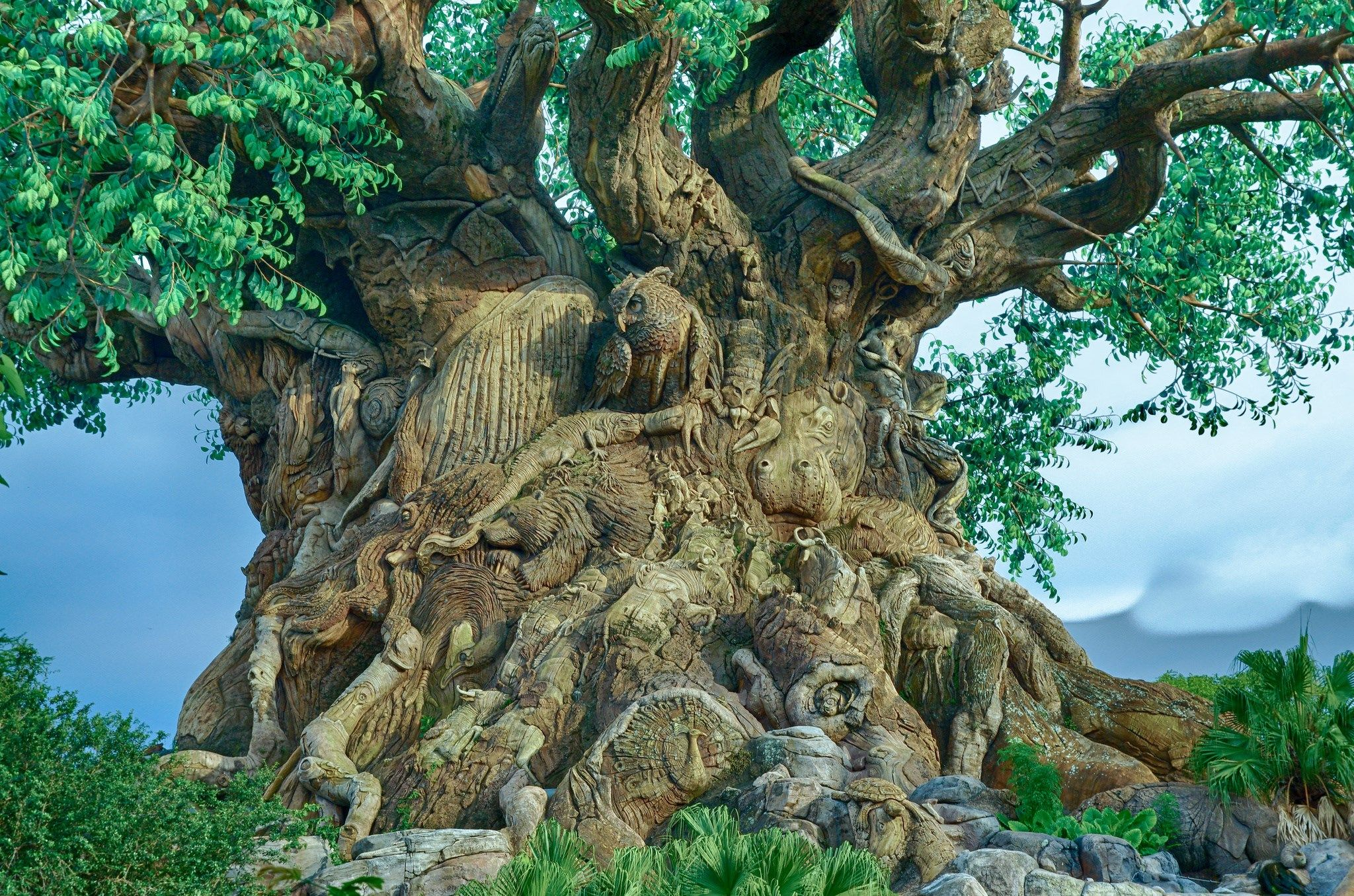 tree of life wall art australia