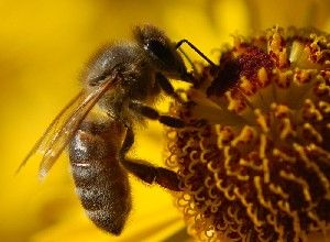honey bees disappearing - 512×376