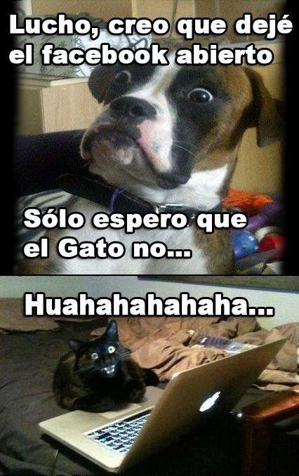 El Perro Del Lucho La Lleva Memes Divertidos Memes Chistosisimos Memes Graciosos