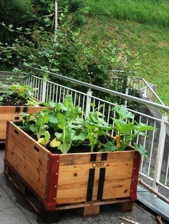 hochbeet in euro palettenrahmen raised bed hochbeet. Black Bedroom Furniture Sets. Home Design Ideas