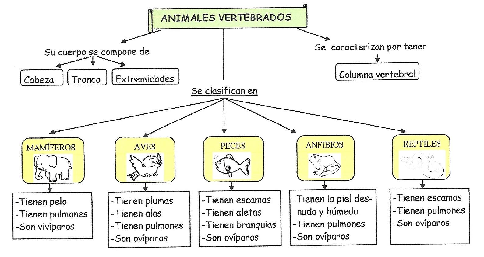 Los animales vertebrados: teoría y actividades   Lectura y ...