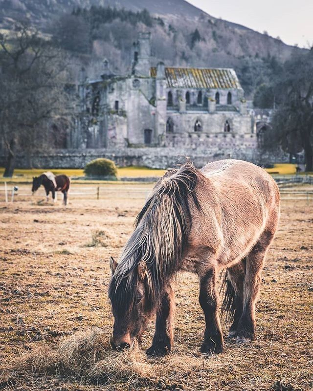 """VisitScotland on Instagram: """"Melrose Abbey is neigh a bad view for these horses in the Scottish Borders!😍 Great capture by @brodie_peters_photo taken earlier this year…"""""""