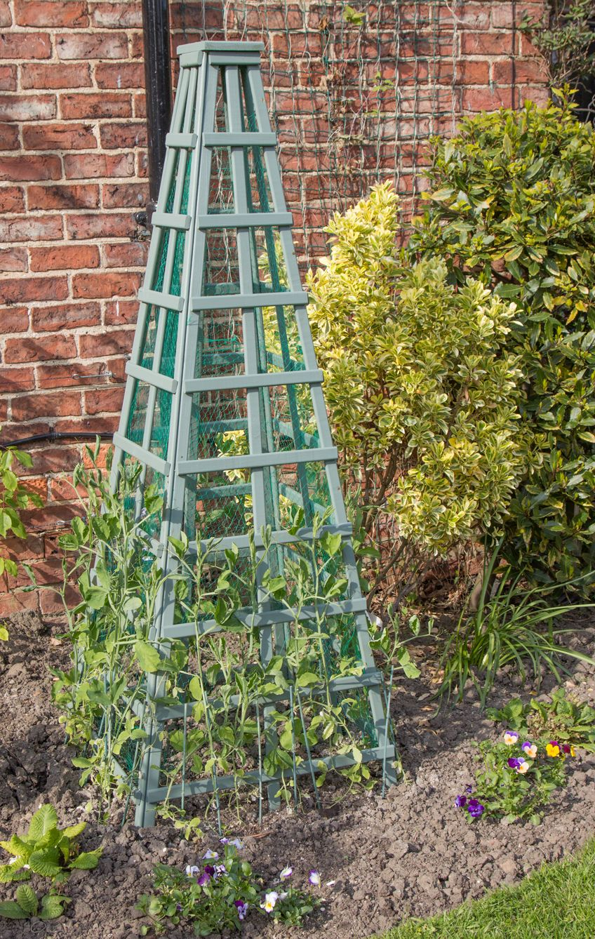 Sweet Pea Trellis Ideas Part - 15: Sweet-peas-growing-sandra-trellis-seedling_shutterstock_190649297.jpg  (848×1338) | Garden | Pinterest | Trellis Ideas, Gardens And Plants