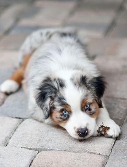 Sweet Doggo Look At That Face Aussie Welpen Hunde Welpen Hunderassen