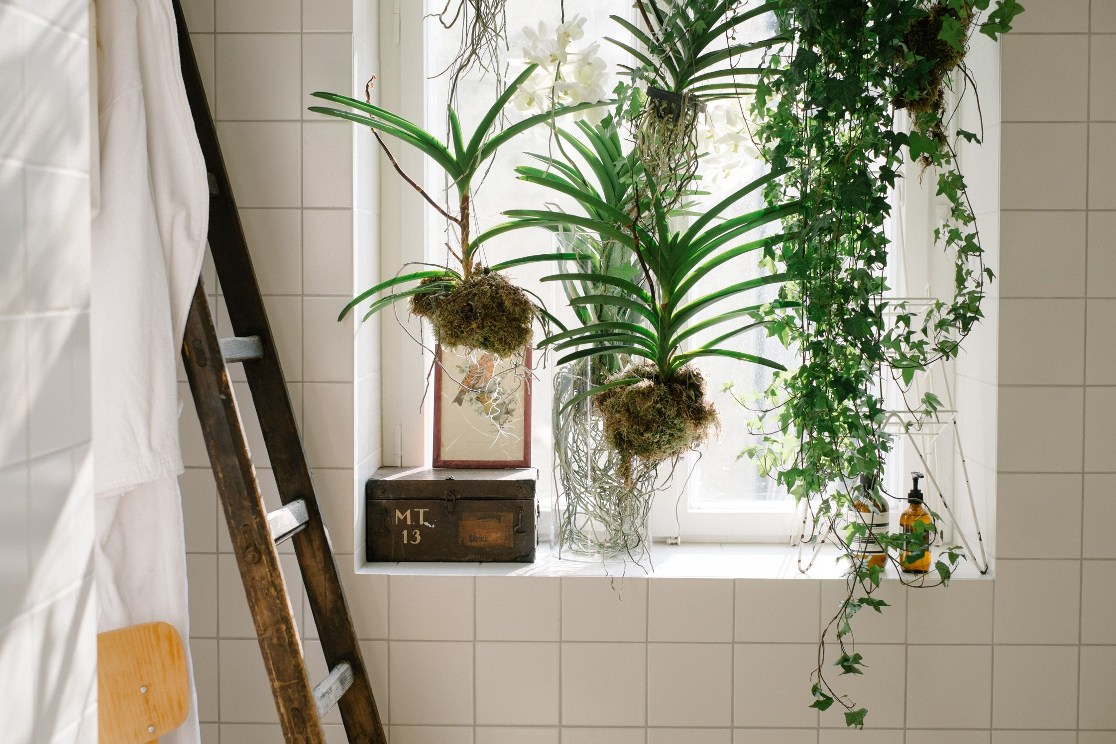 Our Hanging Planters In The Bathroom Of The Fvf Apartment Bathroom Plants Indoor Plants Bathroom Plants