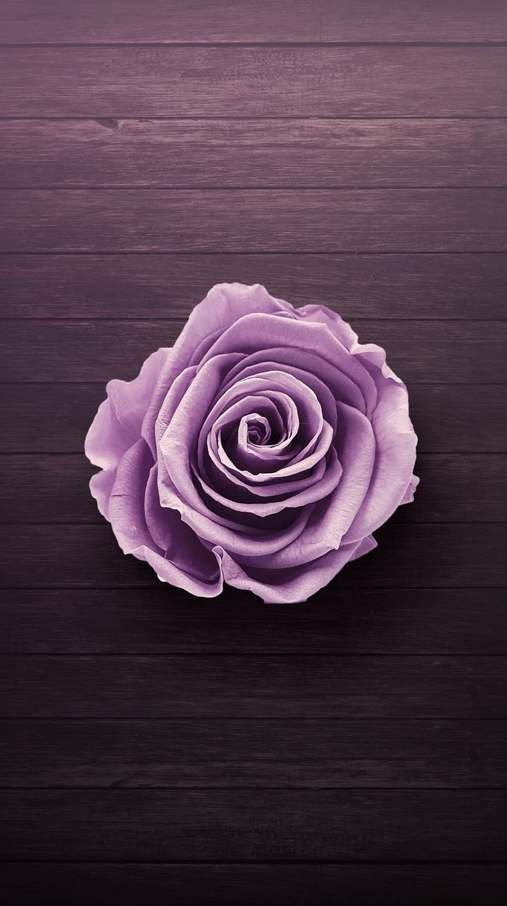 Download Latest Purple Phone Wallpaper HD This Month by aestheticwallpaper.deeparchaeology.com
