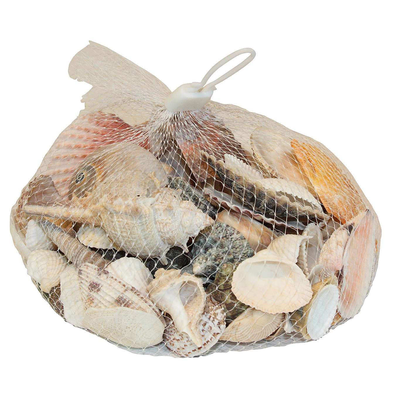 Dunelm Bathroom Accessories Coastal Decorative Shells Dunelm House List To Buy Pinterest