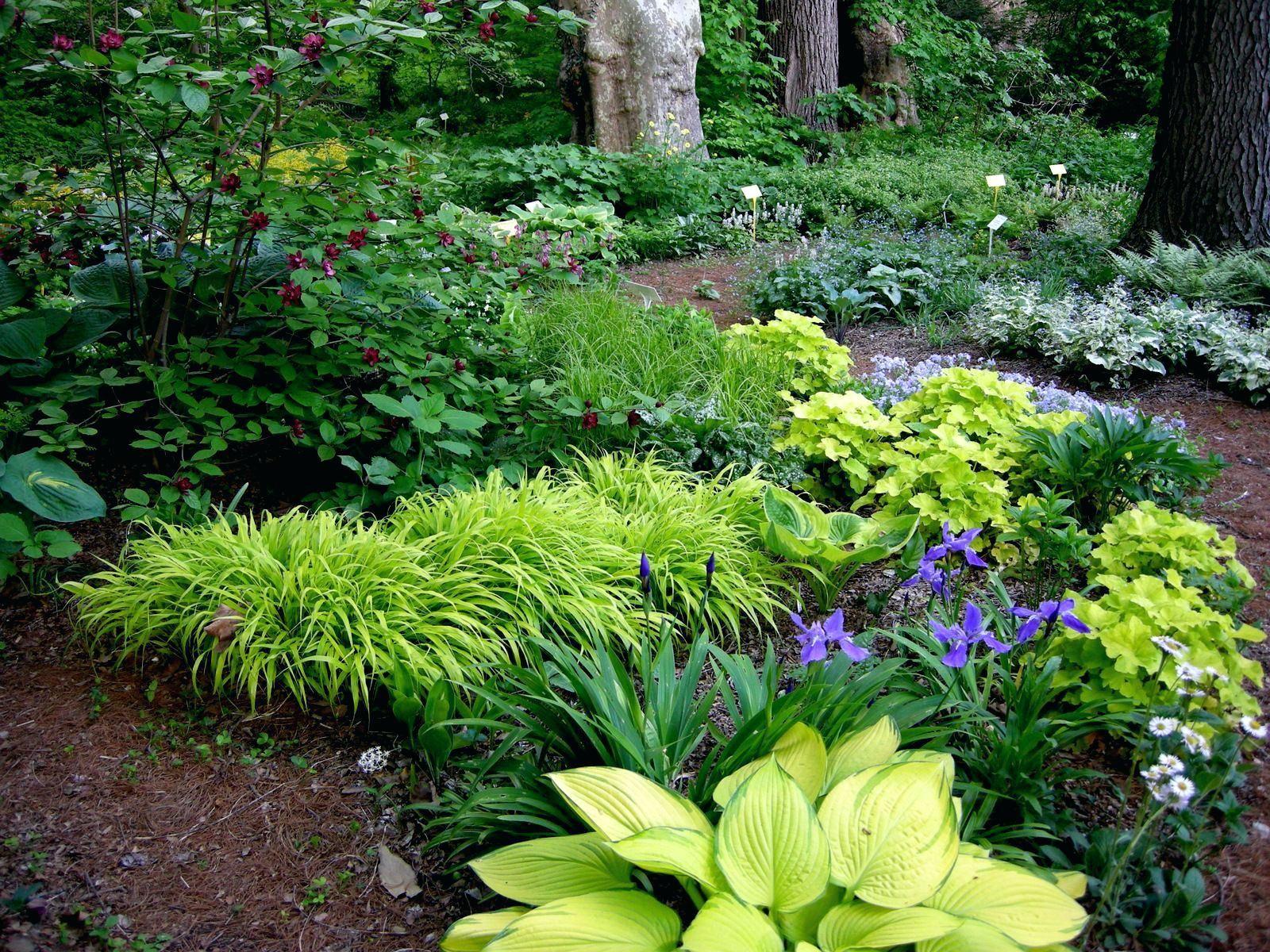 Shade Perennials Zone 7 Garden Designs Foundation Shrubs 7a