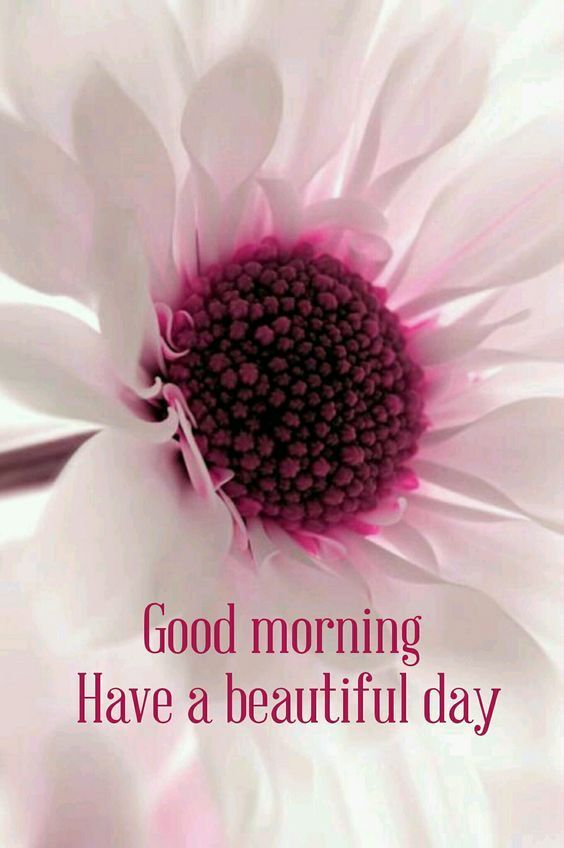 Good Morning Have A Blessed Day Quote With Flower