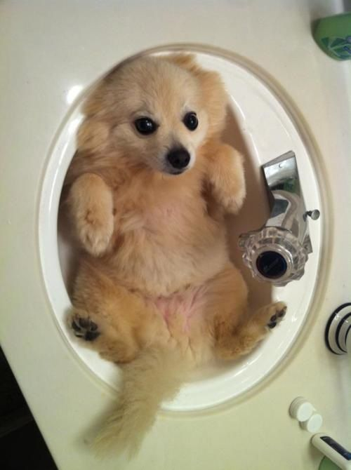 Puppy: Help I\'ve fallen and can\'t get up.... Owner: Bath Time? Puppy ...