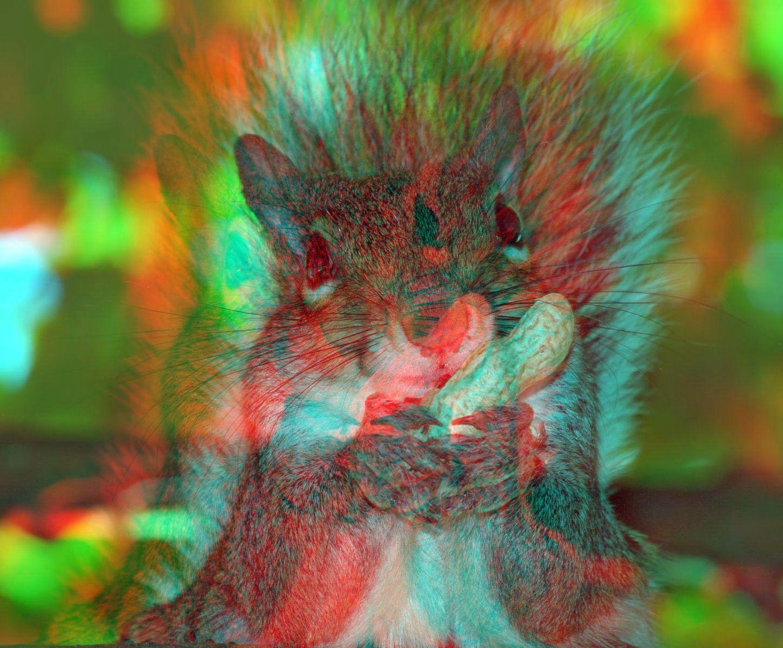 """メガネが要るなw """"Squirrel Posted just now by"""