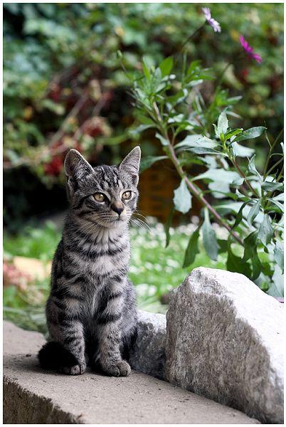 38 By David Bray On Deviantart Grey Tabby Cats Grey Tabby Kittens Grey Cats