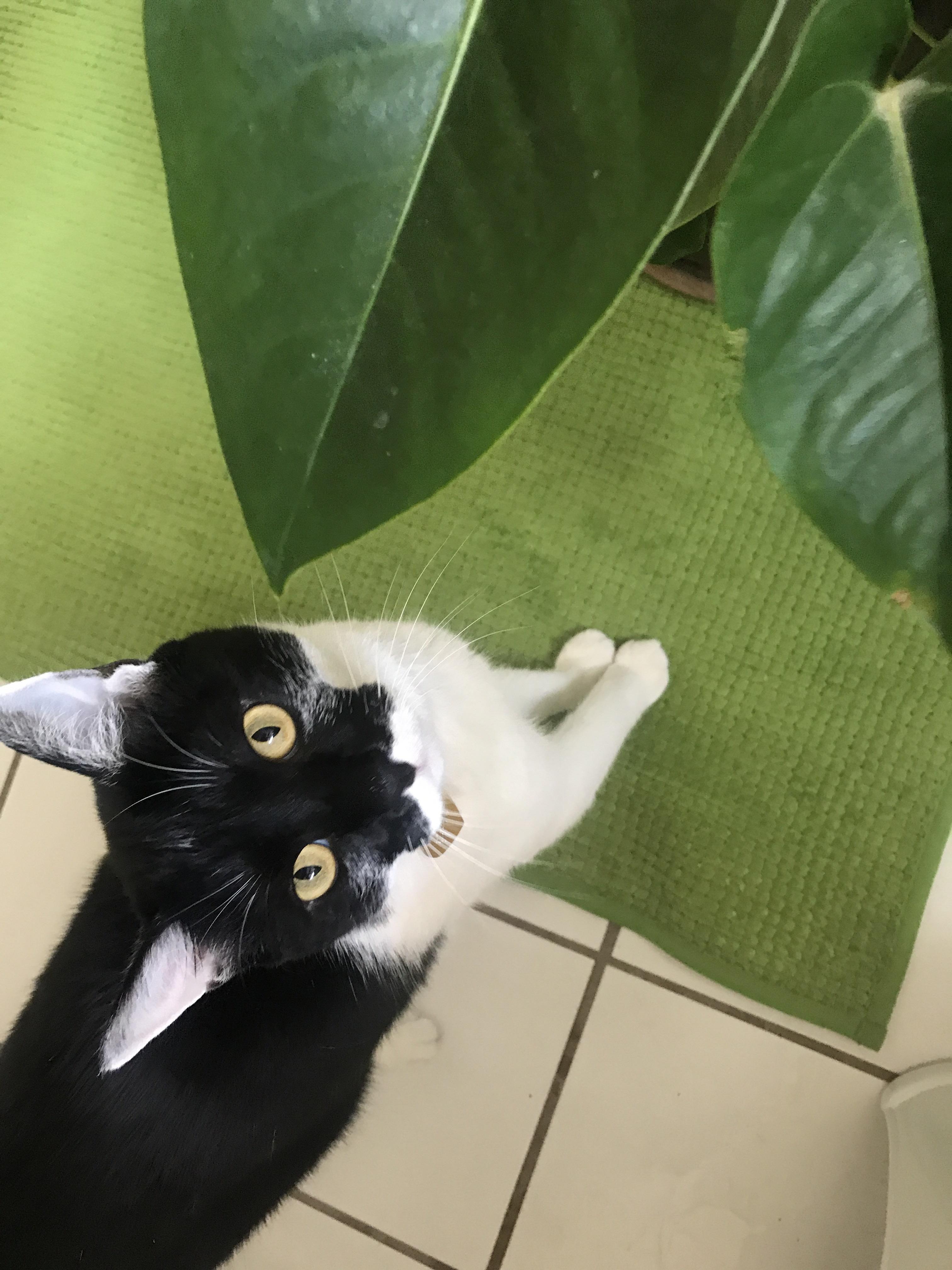 she follows me everywhere I go .. Cat makeup, Cat memes