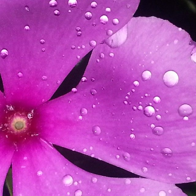 Raindrop #flower #raindrop #rain #dslr #canon #canoniscamera #photo #macro #macrophoto #instaphoto #love #macrolover # #Padgram