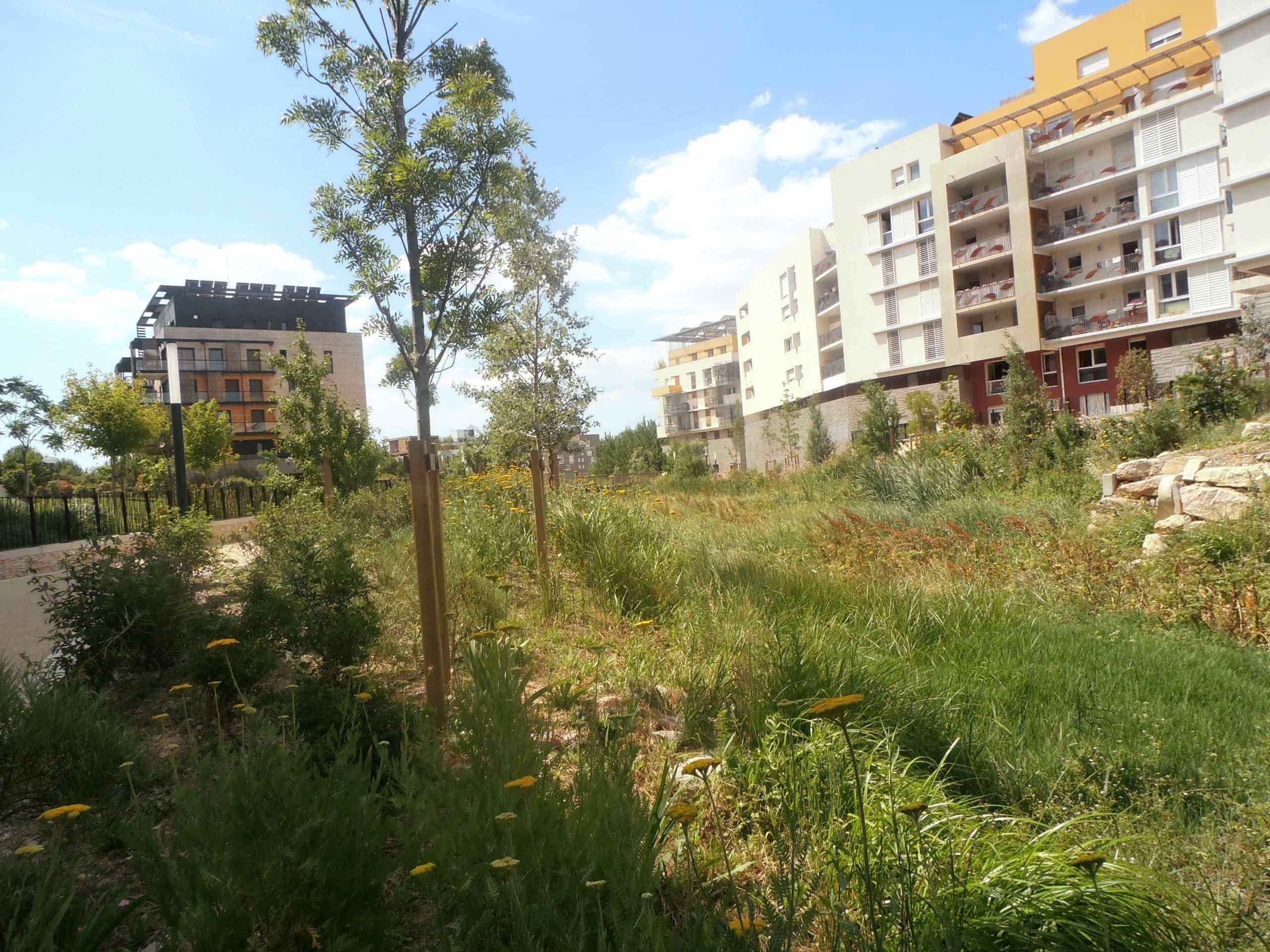 """Nominé 2014 """"Mairie de Montpellier pour le Parc ZAC Marianne"""" (Collectivités > Aménagement de quartier)"""