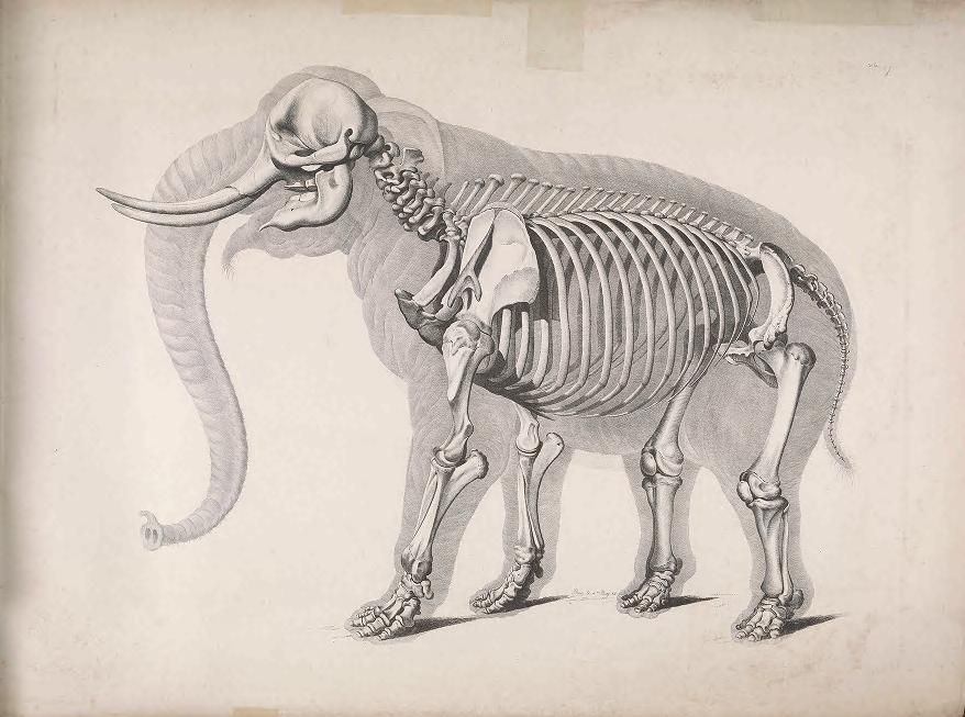Die vergleichende Osteologie - Biodiversity Heritage Library | gcse ...