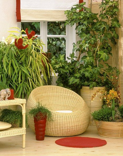 oversized potted snake plants for living room idea   How to keep your houseplants happy: Follow our five-point ...