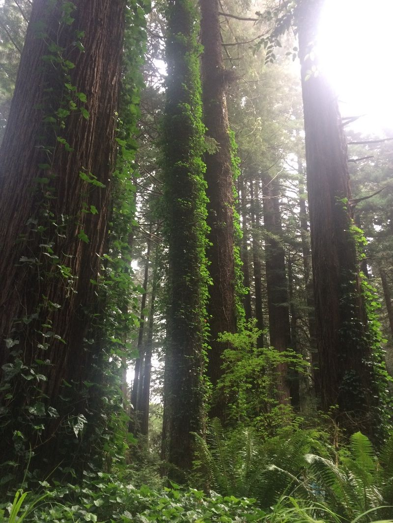 Emerald Forest Rv And Campground In Trinidad California Is Magical Nature Inspiration Natural Landmarks Forest