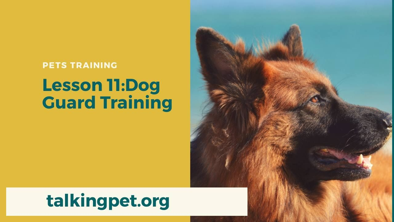 Dog Guard Training In Order To Teach Your Dog The Guard Or