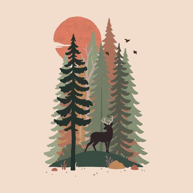 Coniferous | Wild Oak