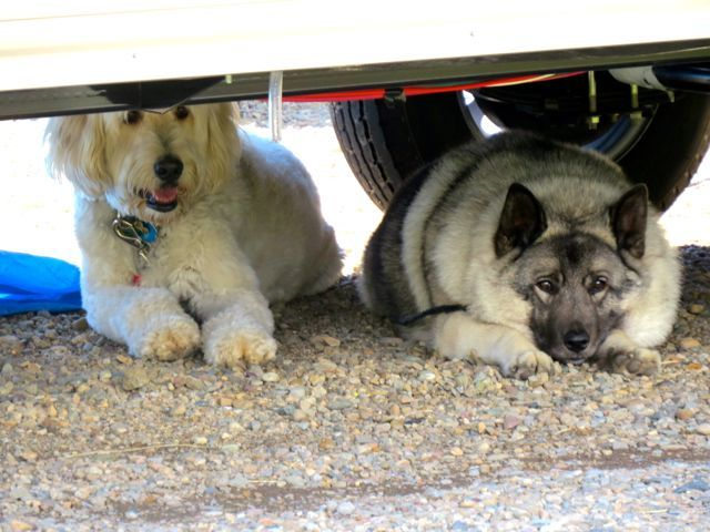 Rv Traveling With Dogs Rv Life Pinterest Rv Travel Camping