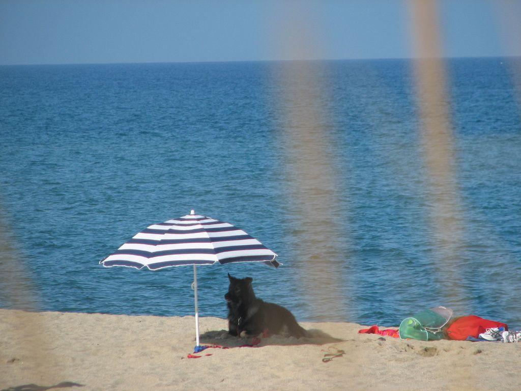 Si te gusta #viajar y tienes un buen amigo perruno, te presentamos las #playas en las que podrás disfrutar del agua del mar sin necesidad de dejar a tu mascota en casa!!!