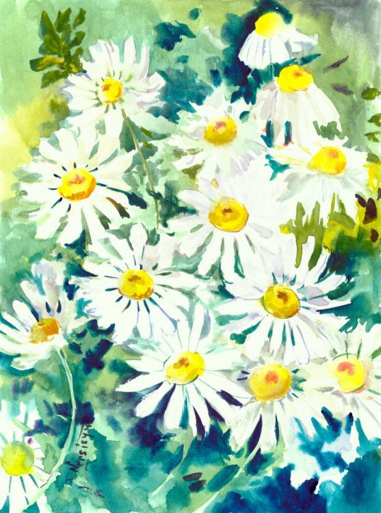 Chamomiles, 12 X 9 in, Daisy, white flowers, herbs, original watercolor painting