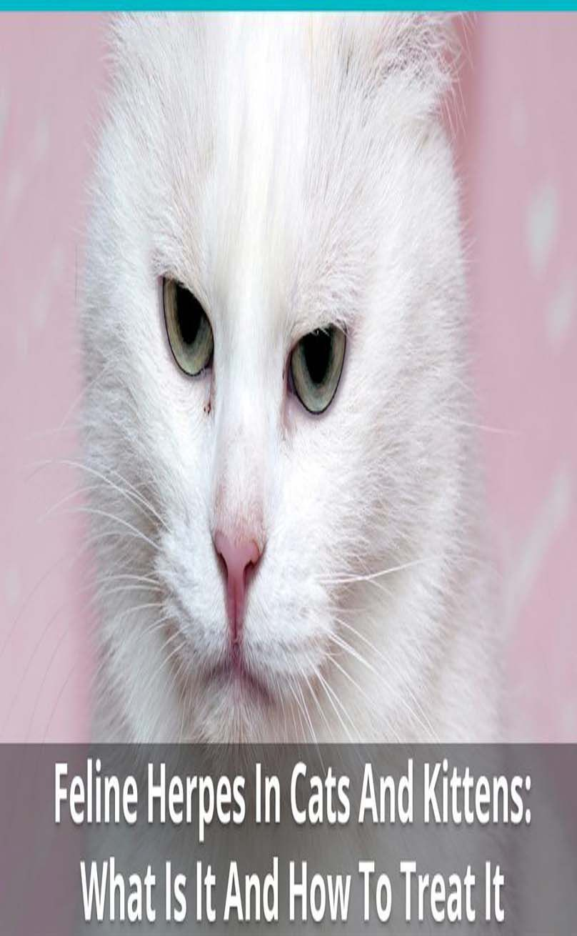 Pin Auf Cat Needs