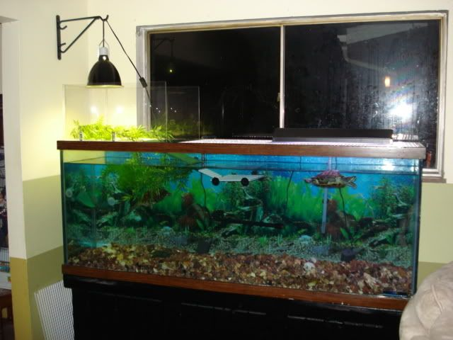 Above tank basking area red ear slider pinterest turtle turtle habitat and aquariums Diy indoor turtle pond