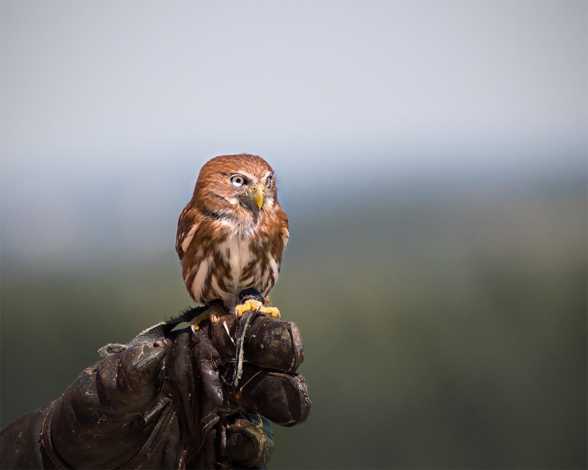 Pin on Majestic and Beautiful Owls