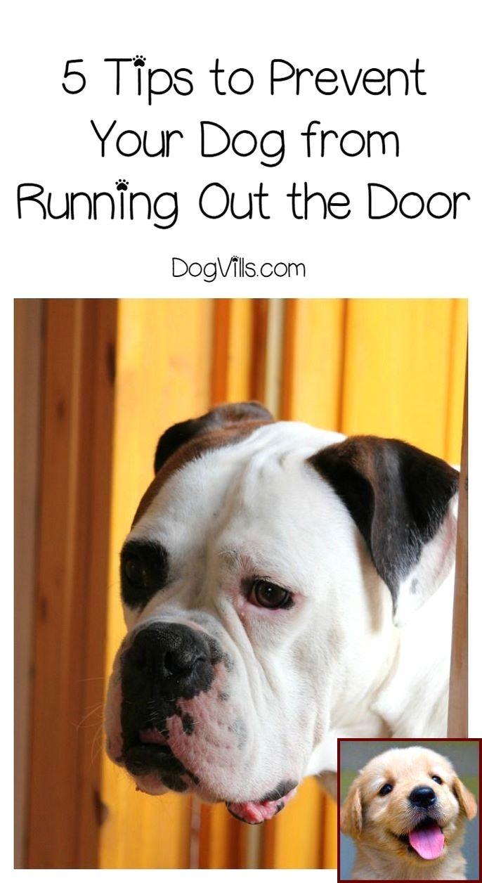 Pin On Dog Behavior