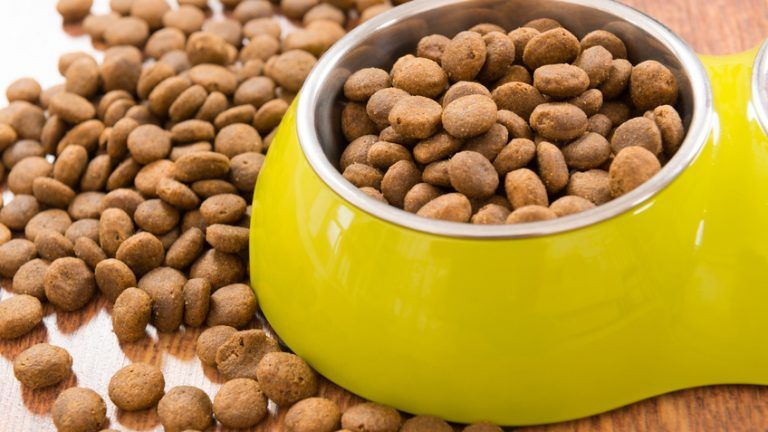 5 best choices for a low sodium dog food dog food