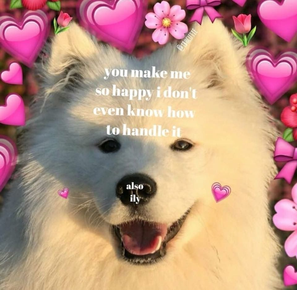 When Happy Doggo Became Sad Doggo Album On Imgur