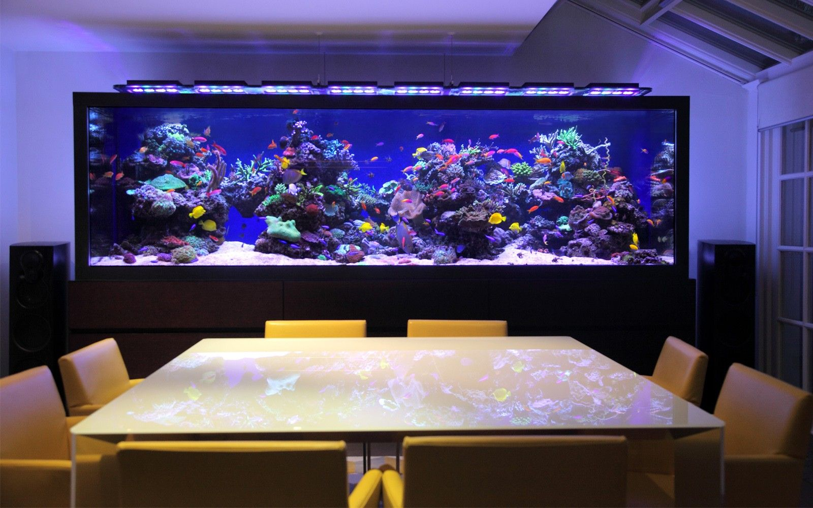 transform the way your home looks using a fish tank | marine fish