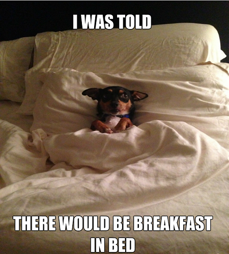 Breakfast In Bed Meme Slapcaption Com Funny Animals Funny Animal Pictures Funny Cute