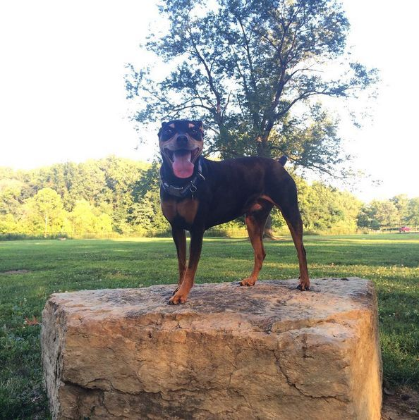 Angus Off Leash Dog Park Dogs Park