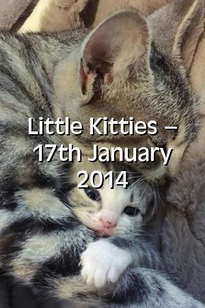 Alexandra Hill Tells About Little Kitties – 17th January 2014   #cats  #catlover  #cute  #love  #lovecats  #Kittens  #Cats  #Colors