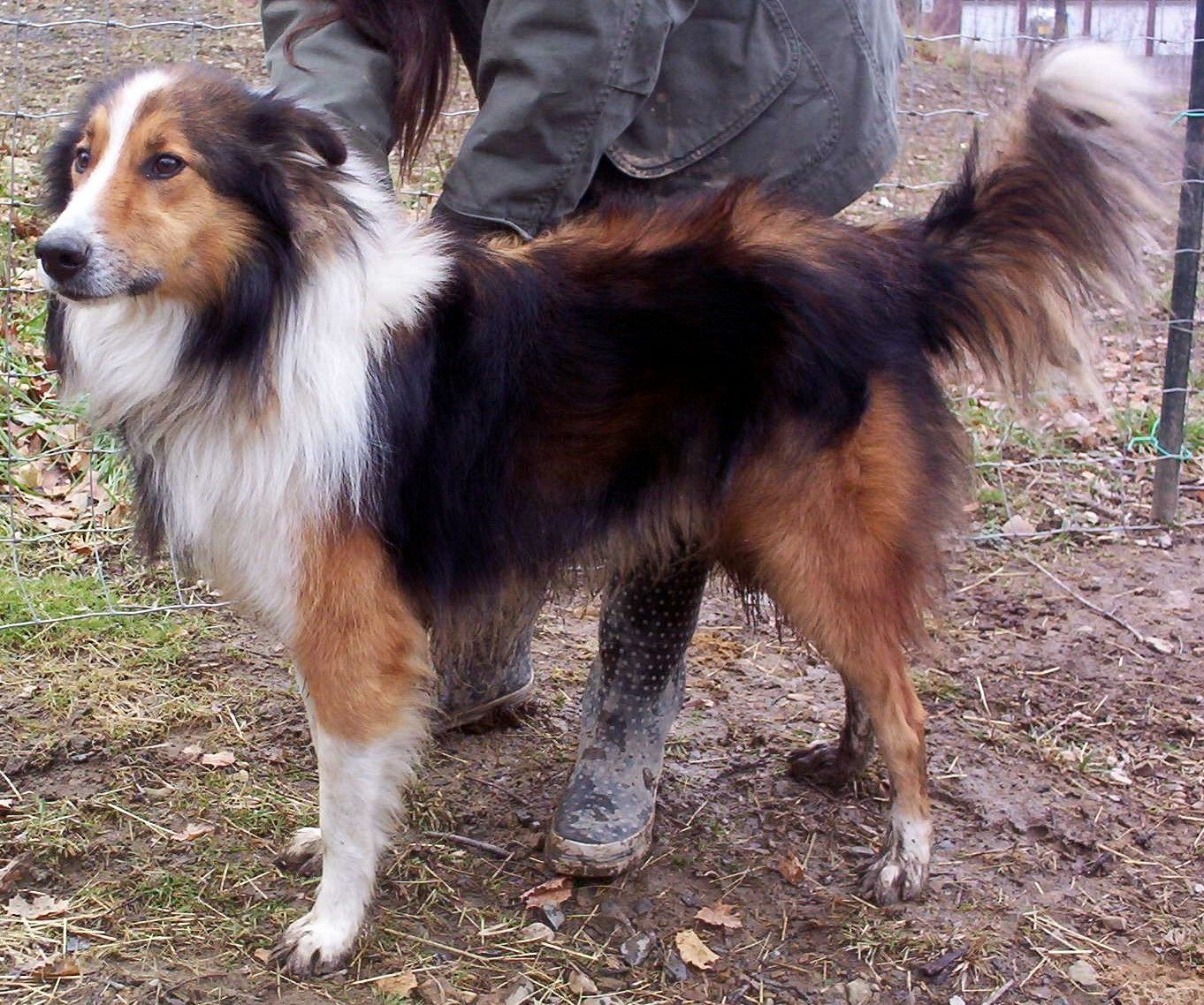 Pin On Farm Collie Farm Shepherd