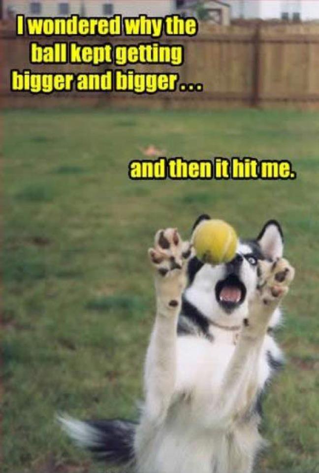 I Wondered Why The Ball Kept Getting Bigger Dog Jokes Funny Dog