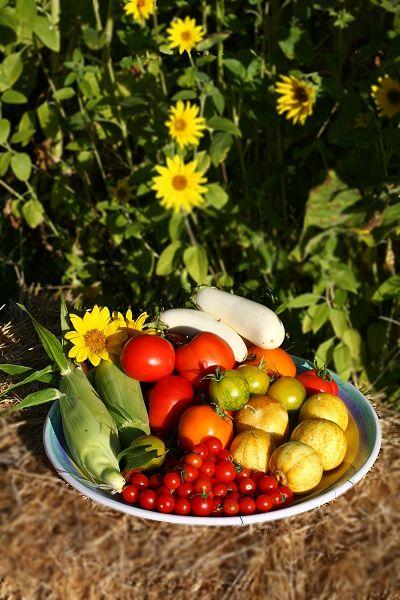 Veganic Farm Internship - Animal Place, Grass Valley, California.