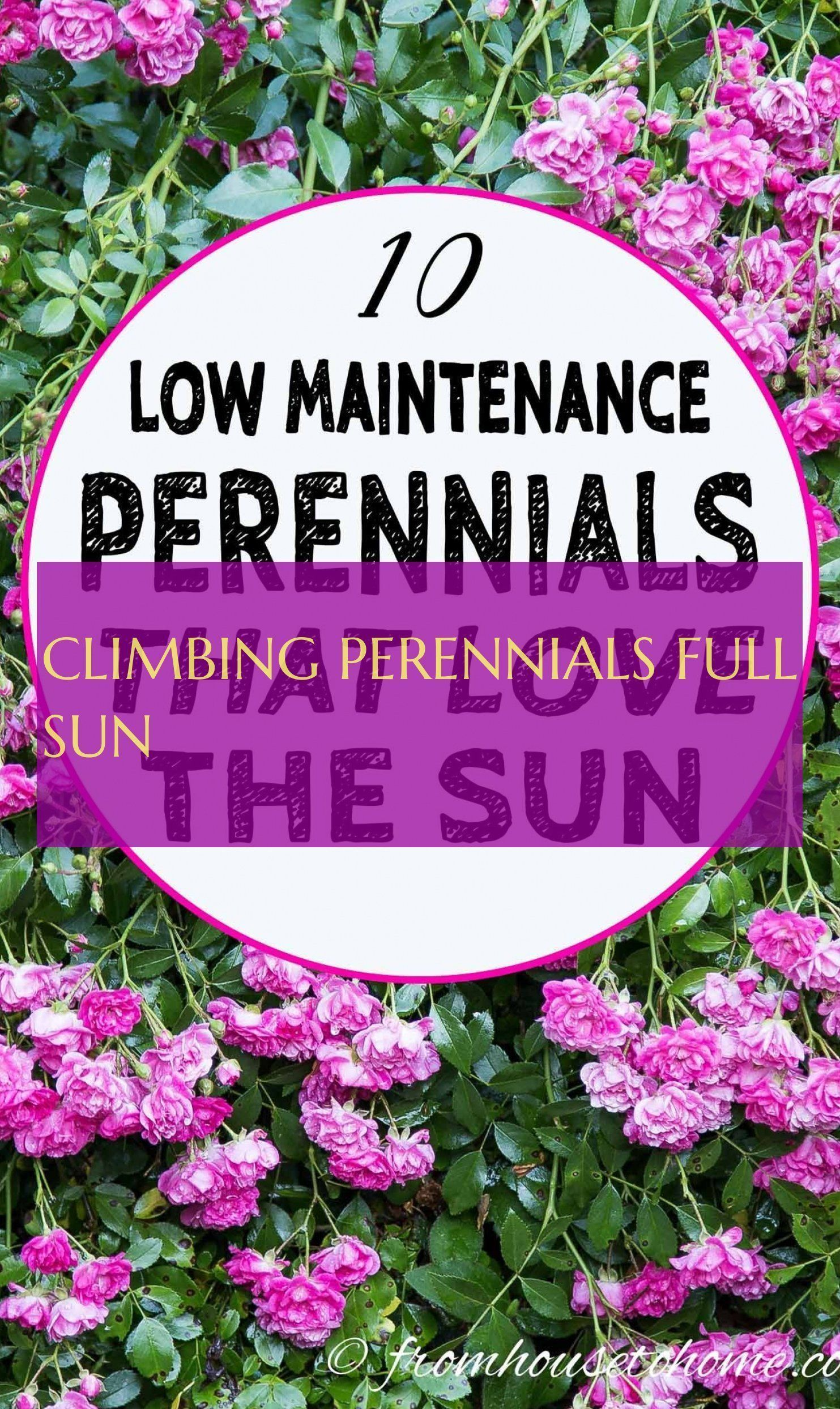 A Comprehensive Overview On Home Decoration In 2020 Full Sun Perennials Perennials Climbing Plants